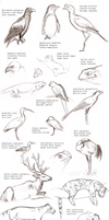 ZOO Sketches by Nachiii