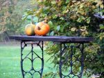 Pumpkins by dmguthery
