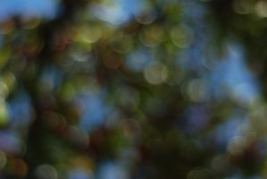Perry Bokeh by redwolf518stock