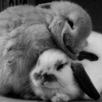 Snuggle by poppies-for-you