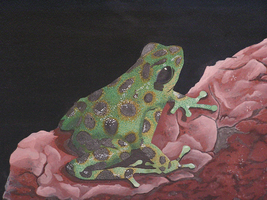 Frog On Rock (unfinished) by ShiniKitty13