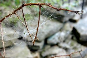 Web of Thorns by WoodenOx