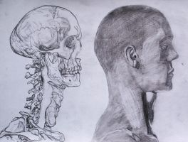 Human skull and head by Sofuia