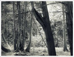 Into the Woods: Lost by Jahootabegajulie