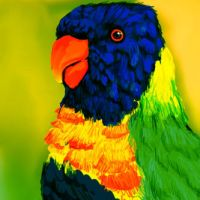 Rainbow Parakeet by theCheeseGrater