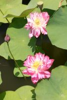 2 Lillies by ChrisTheJeweler