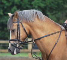 Palomino Welsh 2 by equinestudios