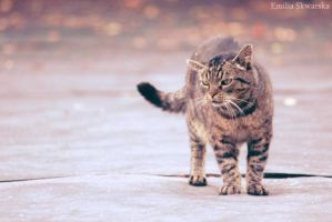 My cat :) by Swallow6
