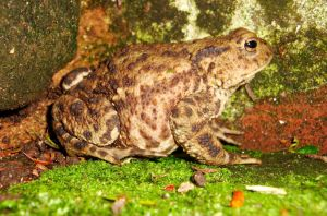 The Toad by Estruda