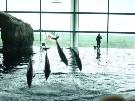 Dolphins- it's a show by Pictwii