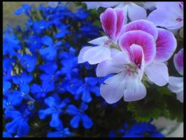 Flowers from garden :2: by Stona2
