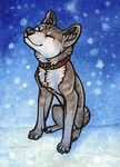ACEO First Snow by CanisAlbus