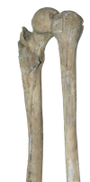 Bones png by gd08