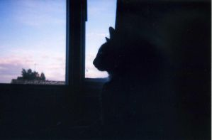 Silhouette Sky (Film Gone Wrong!) by Jane-Rt