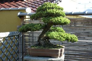 bonsai 07 by secede0