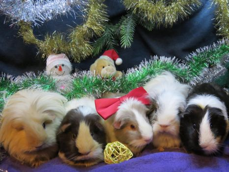 Five Christmassy piggies by Candyfloss-Unicorn