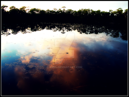An Alligator Sunset by Piing