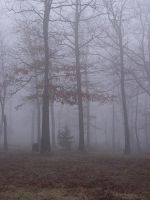 Foggy Oak forest stock 1 by InKi-Stock