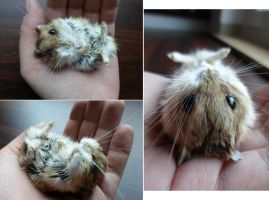 Dzhungarian dwarf hamster lifesize mount SOLD by DeerfishTaxidermy