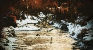 Duck river by MoonKey19