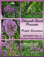 The Purple Sensations Pack by skwonk-stock