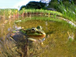 Frog + iPhone 4 + Fisheye by orestART