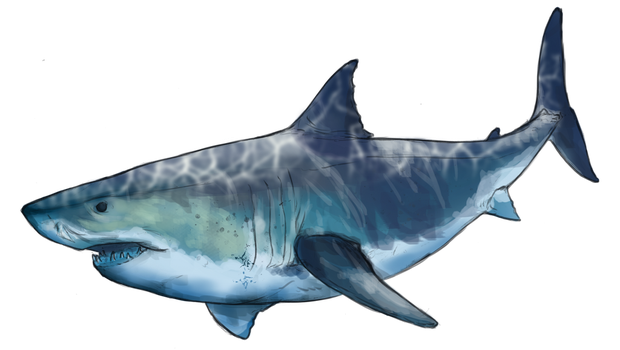 Sharky sharky by Umbrafen