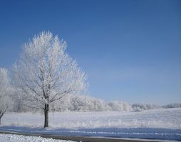 Hoar frosted landscape by Paintsmudger