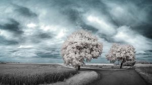 White Trees Part IX by myINQI