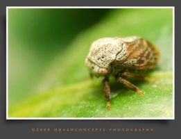bugs13 by dhead