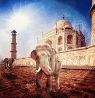King Of India by SpaceDynArtwork