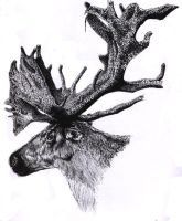 Caribou Ink by CrimsonSilk