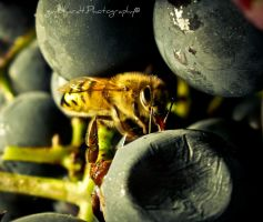 Bee by Gundhardt