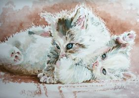 Kitties by danuta50