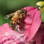Bees and flowers X by starykocur