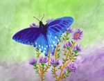 Blue butterfly by lettym