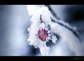 crystalline by sorretto
