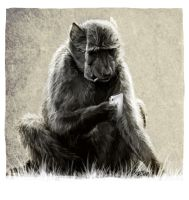 Baboon by BooYeh