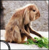 Rabkey or Monbit by HumanDescent