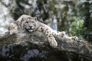 Relaxed by JennyD-Photography