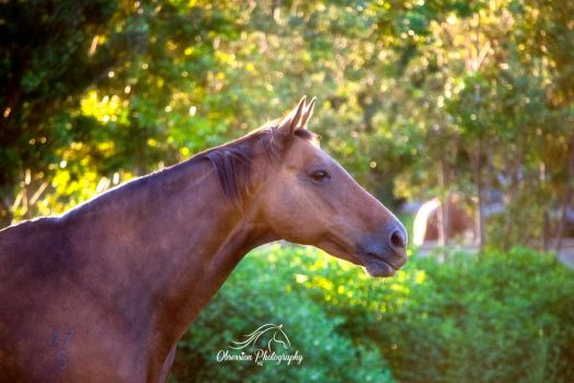 My 19yr old TB mare... by ObsessionNZ