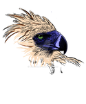 Philippine eagle 2 Tshirt by junver