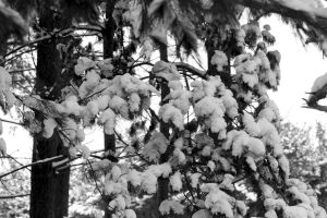 Snowy Woods 07 by Adeimantus