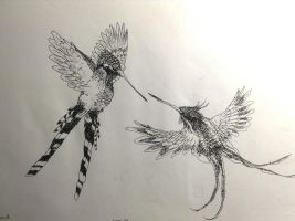 Duelling Hummingbirds by Cypselurus