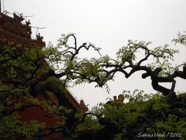 Twisted Branches and a Little Bird by EliN-lianoR