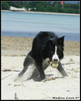 Border Collie Action Slide by Lady-AKyashaa