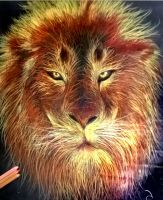 Lion hand drawing by cumalee