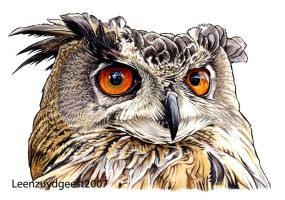 Eurasian eagle owl by LeenZuydgeest
