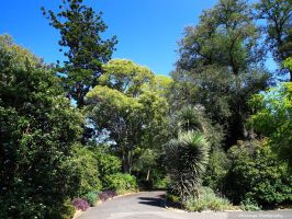Royal Botanic Gardens, Melbourne 6 by Okavanga