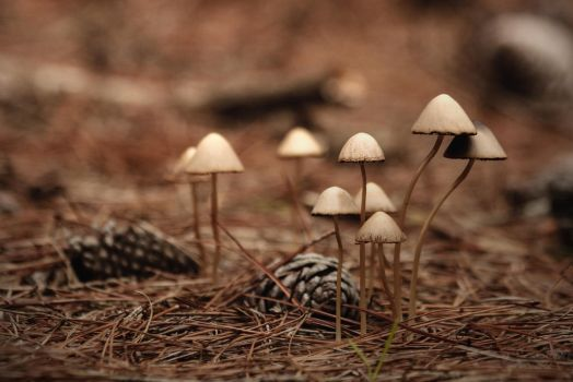 A meeting on the forest floor I by AlejandroCastillo